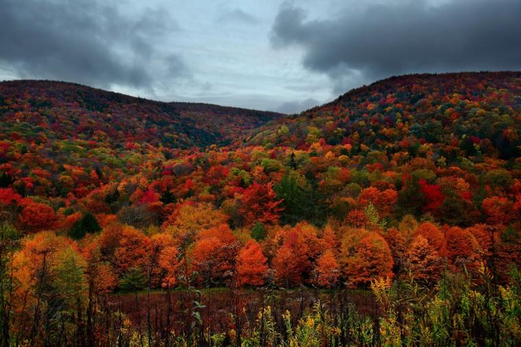 Autumn Mountain Foliage